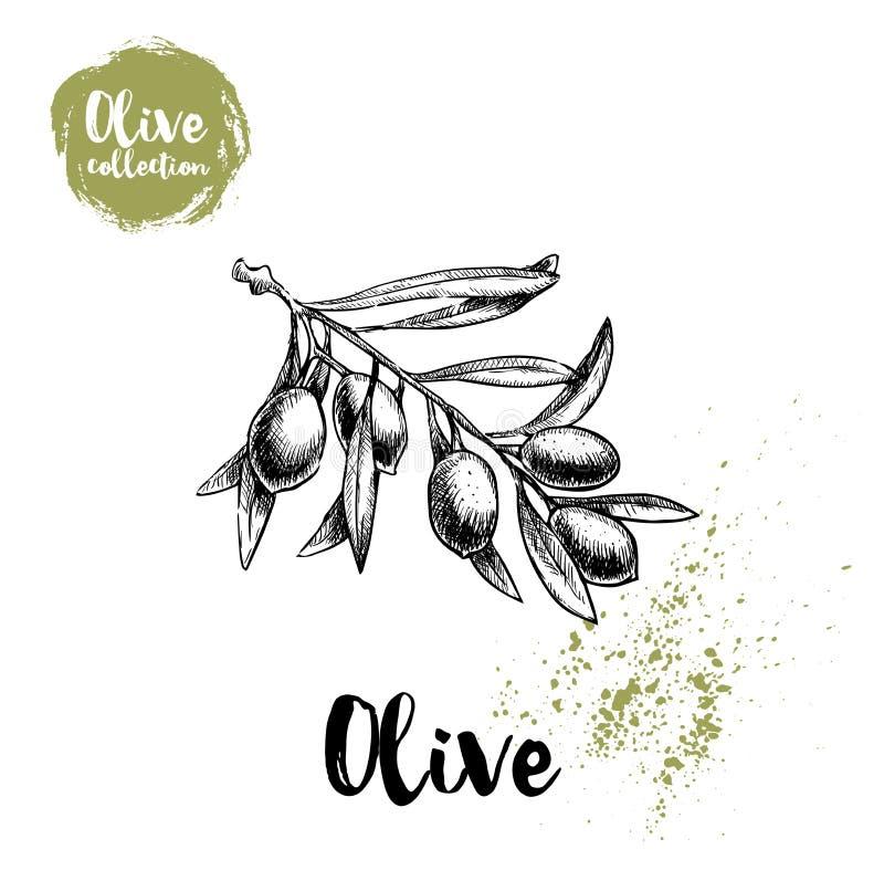 Плакат оливковой ветки Нарисованная рукой иллюстрация вектора стиля эскиза для дизайна меню ресторана, рынков иллюстрация вектора