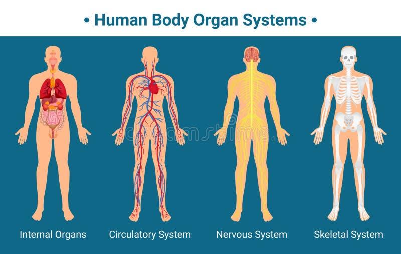 Плакат систем органа человеческого тела иллюстрация вектора