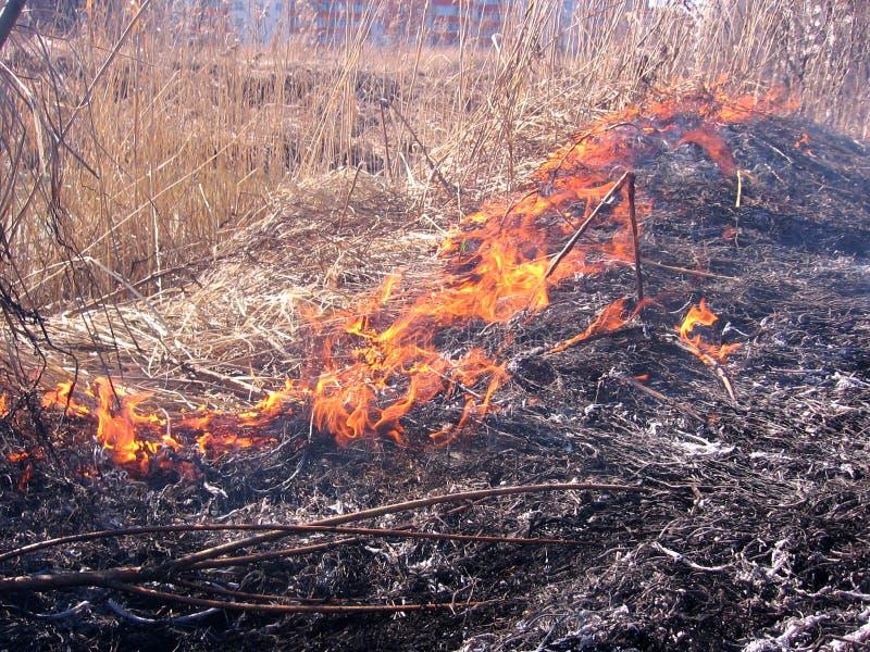 Пламена лесного пожара распространили над опасностью сухой травы стоковые изображения rf