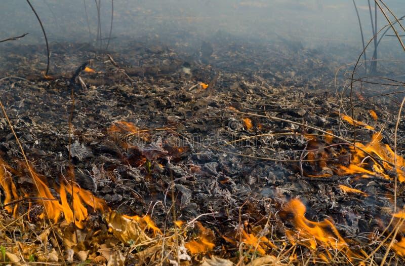 пламя 13 brushfire стоковые фото