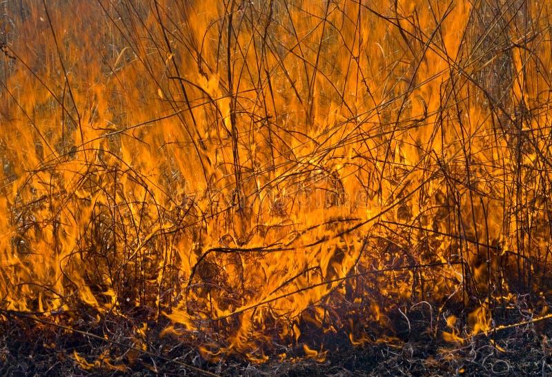 пламя 23 brushfire стоковое фото