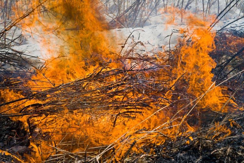 пламя 29 brushfire стоковое изображение