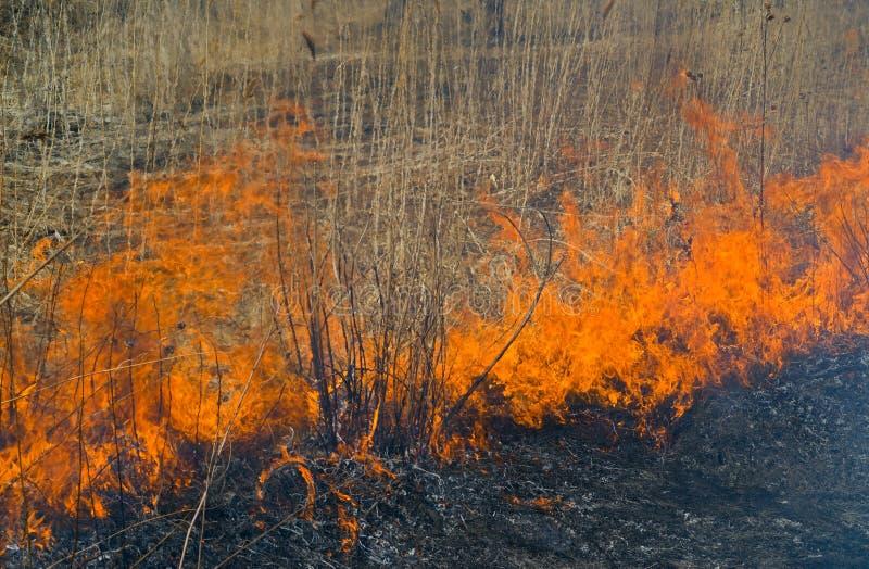 пламя 30 brushfire стоковая фотография rf
