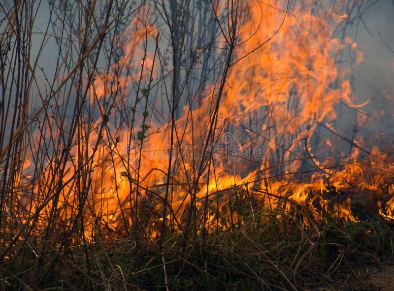 пламя 5 стоковая фотография rf