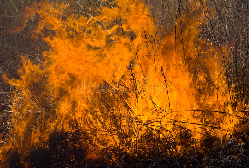 пламя 9 brushfire стоковая фотография rf