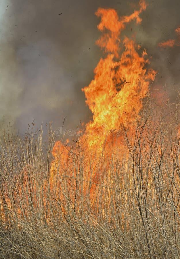 Пламя brushfire 27 стоковое фото rf