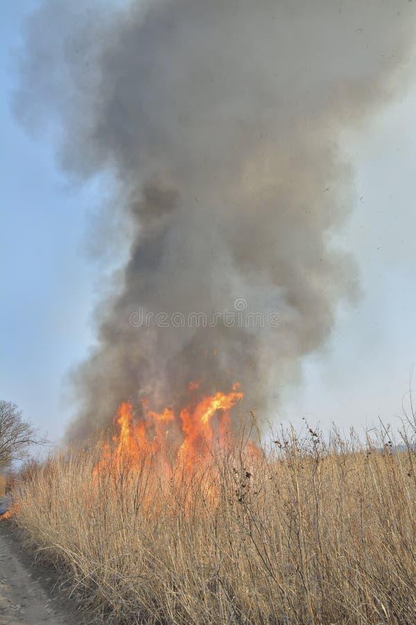 Пламя brushfire 33 стоковые изображения