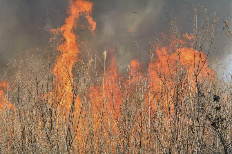 пламя 29 brushfire стоковое фото