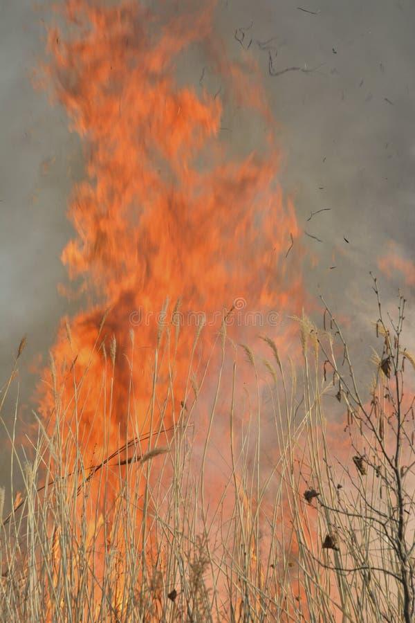 Пламя brushfire 26 стоковые фото