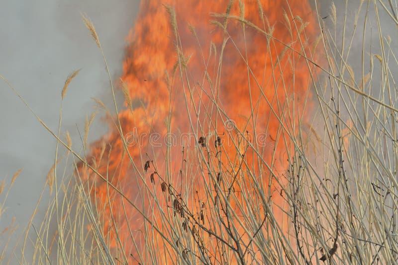 Пламя brushfire 32 стоковые фото