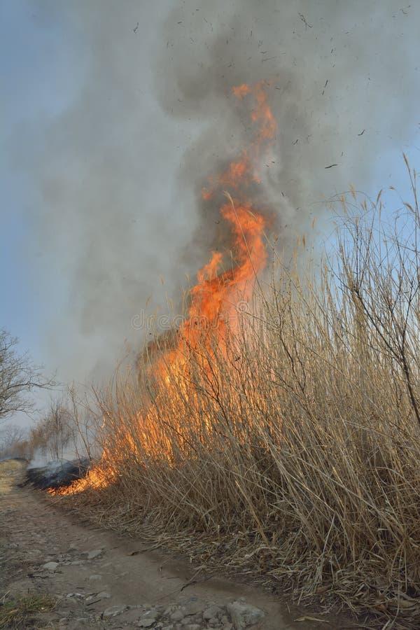 Пламя brushfire стоковые фото