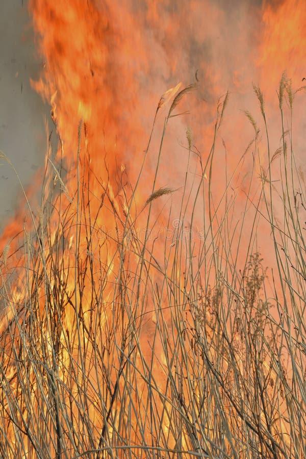 Пламя brushfire 28 стоковое фото rf