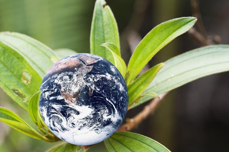 планета земли живущая стоковая фотография rf