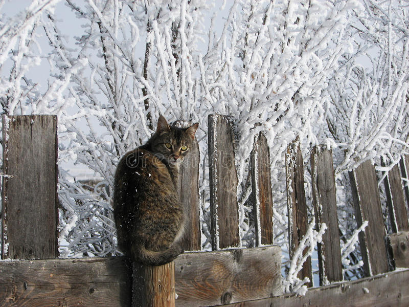 планка загородки кота холодная стоковые изображения rf