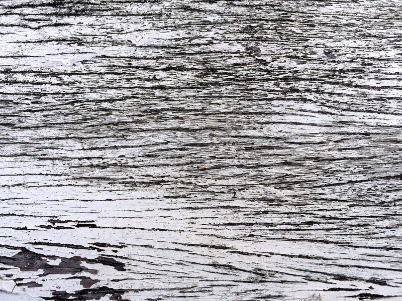 Планка коры дерева стоковые фотографии rf