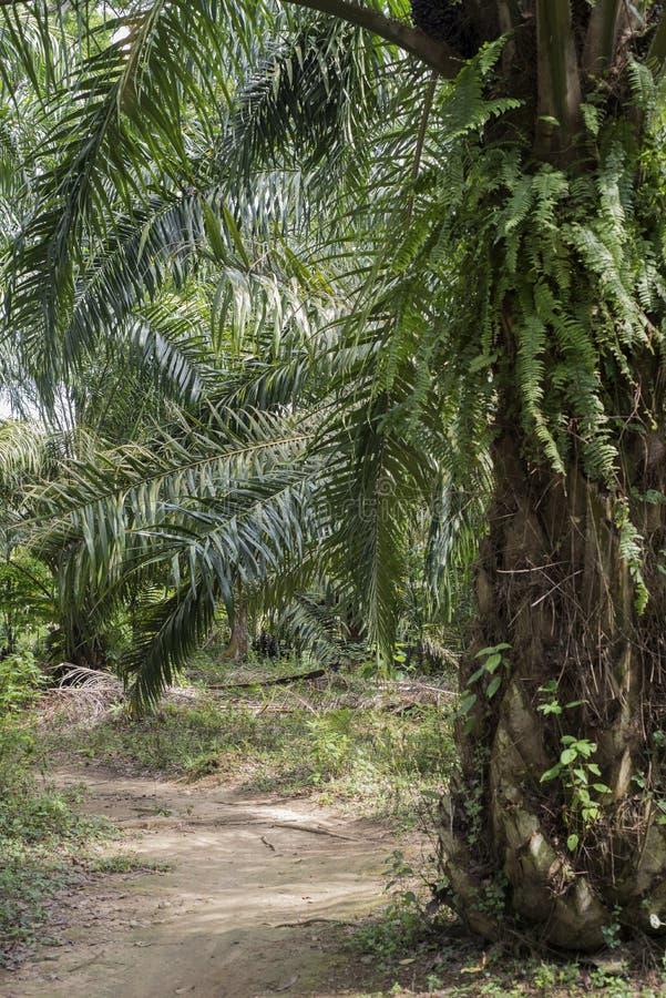 Плантации пальм в Суматре, Индонезии стоковое изображение