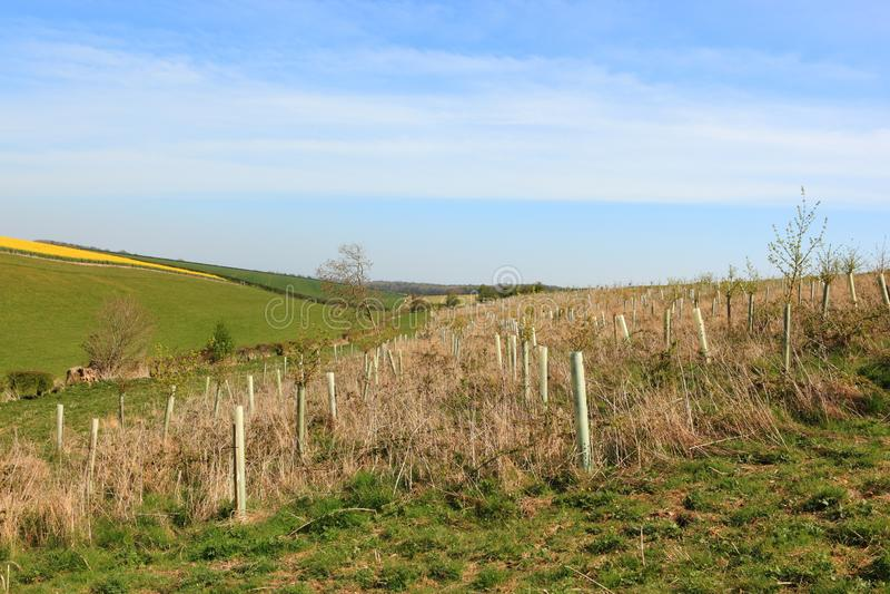 Плантация молодых деревьев в ландшафте сельского хозяйства заплатки в весеннем времени стоковые изображения rf