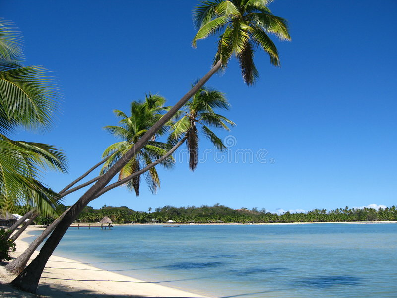 плантация острова Фиджи стоковые изображения rf