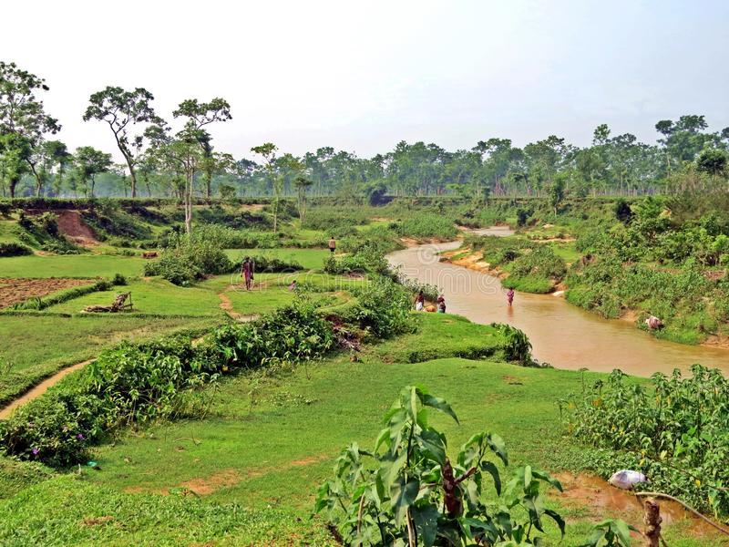 плантация чая в Srimangal, Бангладеше стоковая фотография