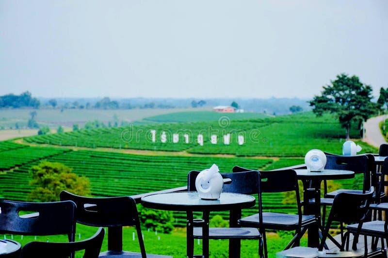 Плантация чая Choui Fong, Chiang Rai, Таиланд стоковое изображение