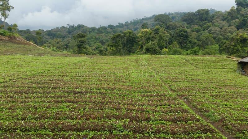 плантация стоковое фото rf