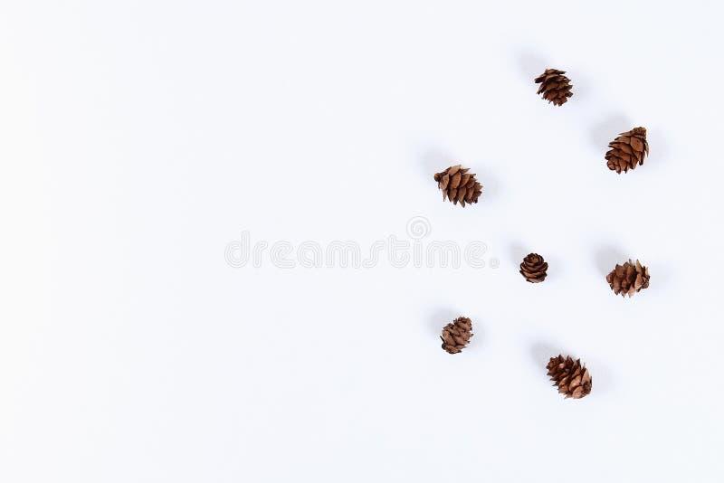 План рождества белизна сосенки предмета предпосылки изолированная конусом Новый Год 2019, рождество, концепция зимы Космос экземп стоковое изображение