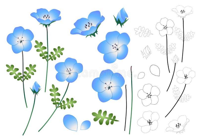 План цветка голубых глазов младенца Nemophila также вектор иллюстрации притяжки corel На белой предпосылке иллюстрация штока