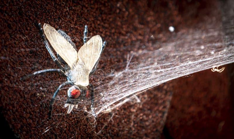 Пластиковая муха уловленная в правой сети стоковые фото