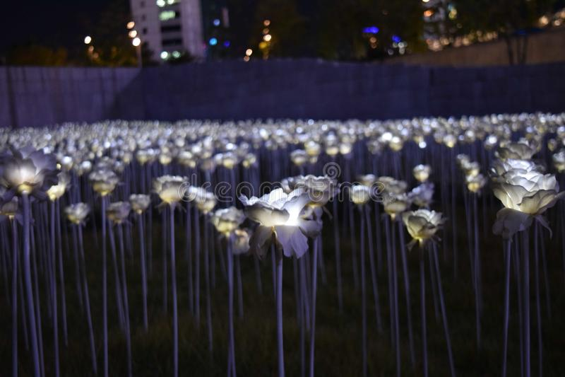 Пластиковые цветки в городе стоковое изображение
