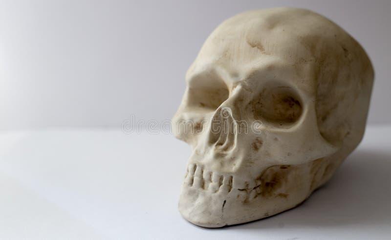 Пластиковый человеческий череп стоковая фотография