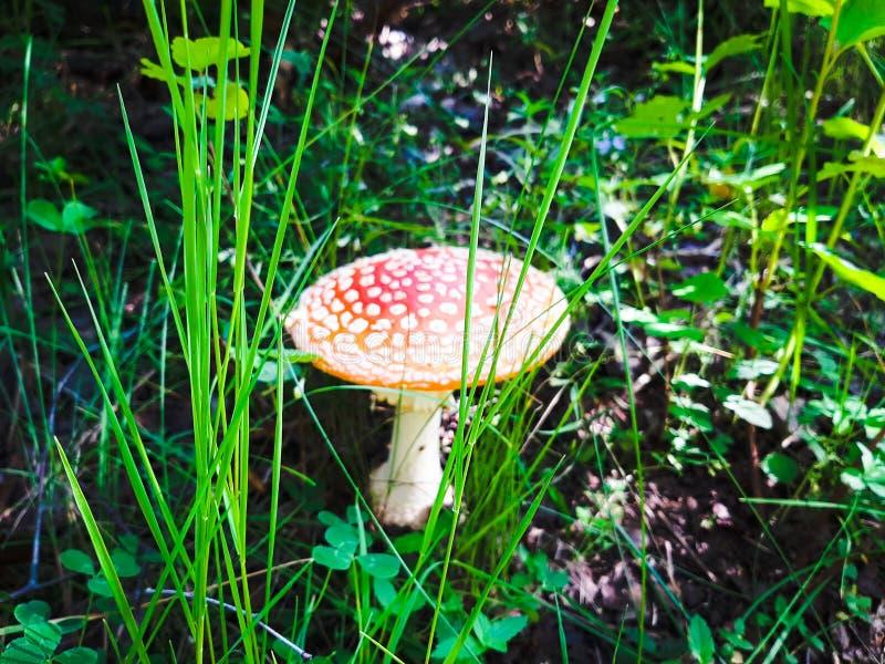 Пластинчатый гриб стоковые фото