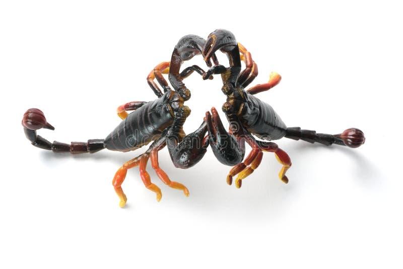 пластичные скорпионы стоковые изображения rf