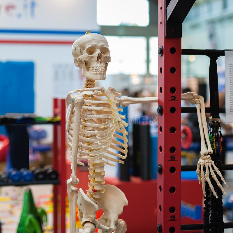 Пластичный человеческий скелет в представлении расслабленного и потехи стоковые фотографии rf
