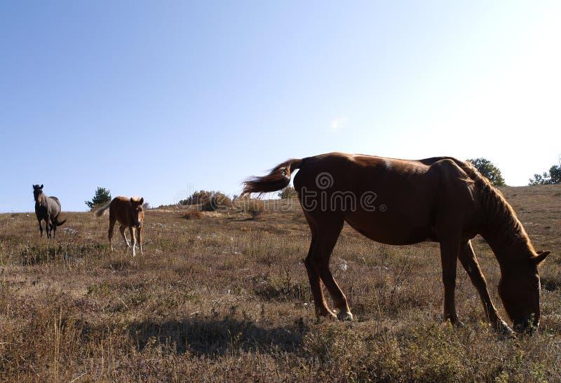 плато s горы лошадей стоковое изображение