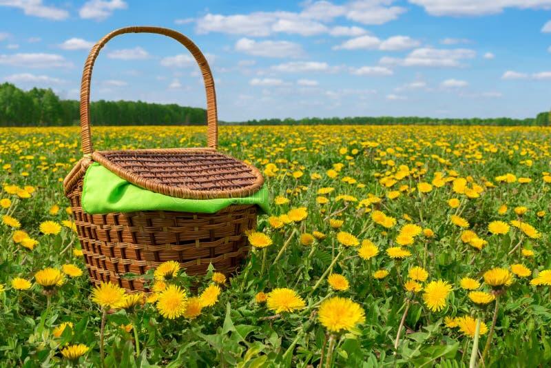 Плетеная корзина с зеленой салфеткой на луге с одуванчиками Пикник весны в луге Луг весны с одуванчиками стоковая фотография rf