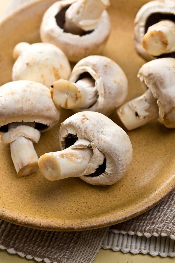 Download плита грибов кнопки стоковое изображение. изображение насчитывающей гриб - 18393099