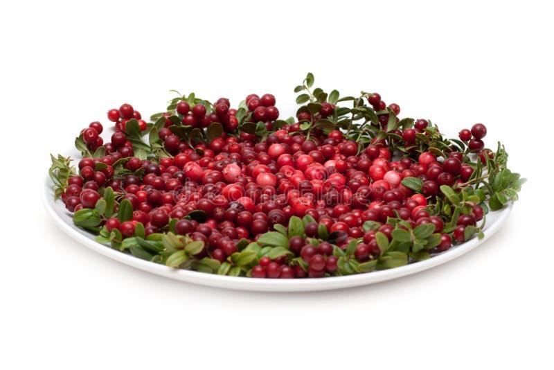 плита cowberry стоковые изображения rf