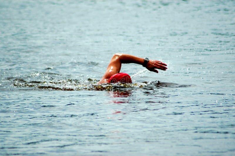 пловец стоковые фотографии rf