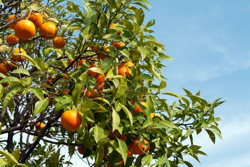 Download плодоовощи ветвей стоковое изображение. изображение насчитывающей плодоовощ - 17604261