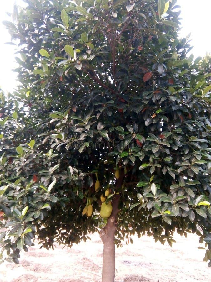 Плодоовощи дерева стоковое фото rf