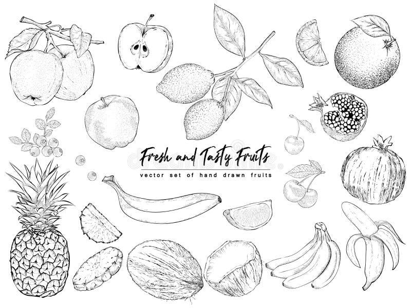 Плодоовощи и ягоды Комплект изолированных реалистических объектов природы стоковая фотография rf