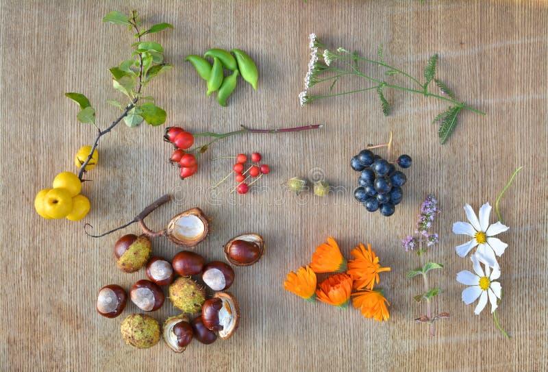 Плодоовощи, каштаны и травы осени стоковые изображения rf