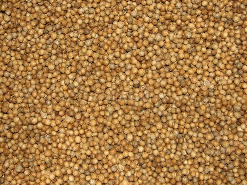 плодоовощи кориандра стоковая фотография rf