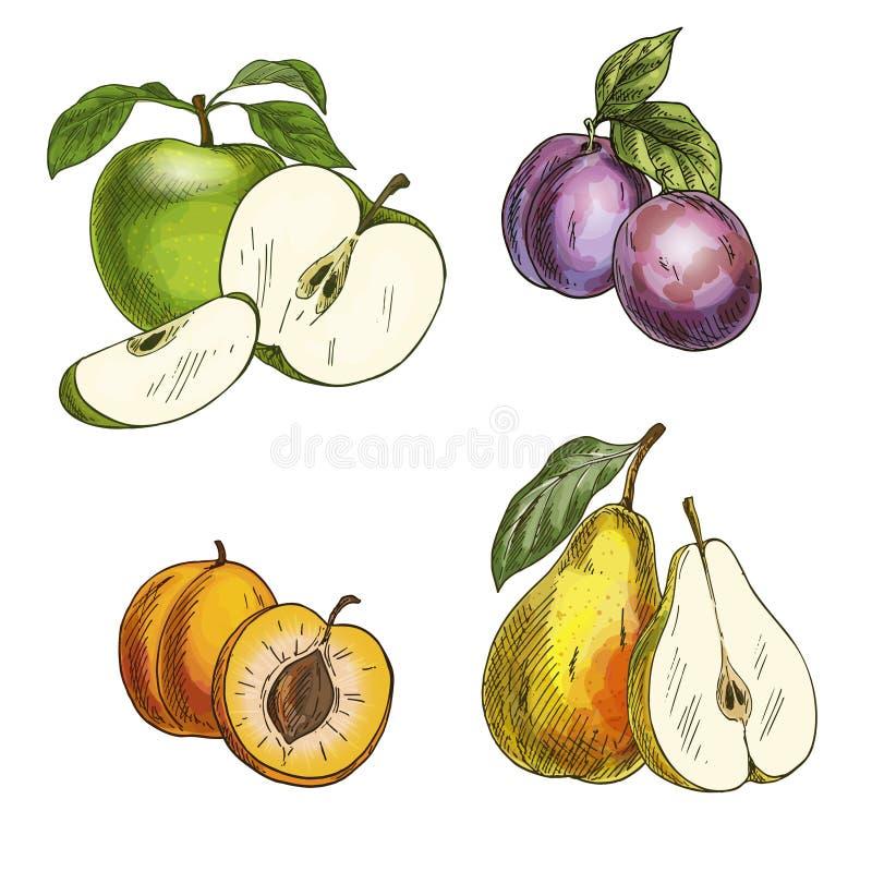 Плодоовощи сада Яблоки, груши, сливы, абрикосы иллюстрация вектора