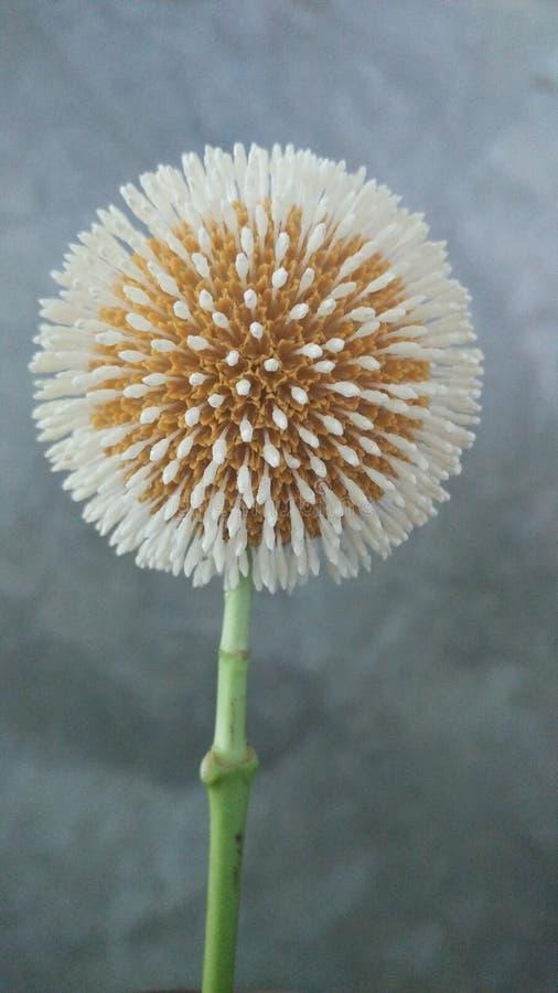 Плодоовощ имея цветок стоковая фотография