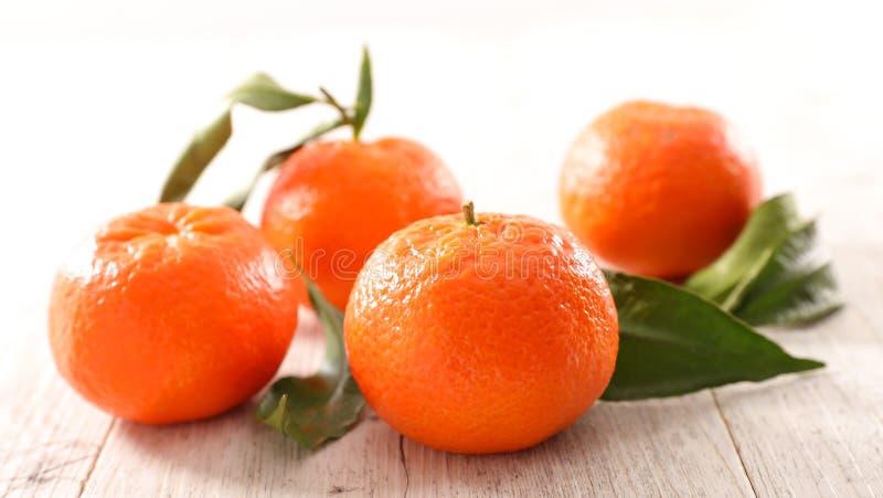 Плодоовощ и лист Клементина стоковое изображение