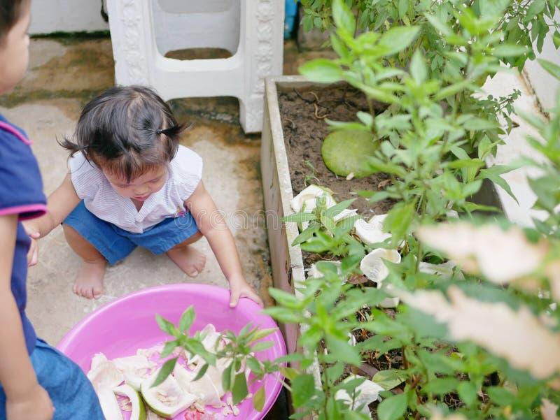 Плодоовощ слезает, помело, метать маленькими младенцами внутри vegetable бака как удобрение стоковое фото rf