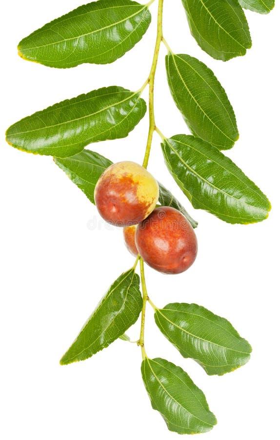 Плодоовощ Jujube стоковые изображения rf