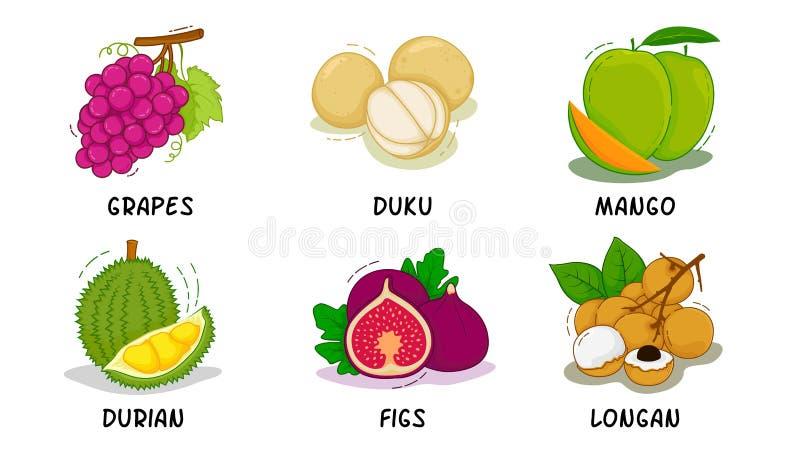 Плоды, плоды собрание, виноградины, Duku, манго, дуриан, смоквы, Longan иллюстрация вектора