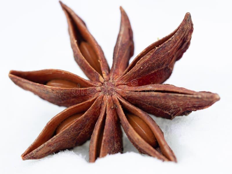 Плод и семена специи анисовки звезды изолированные на белизне стоковая фотография rf